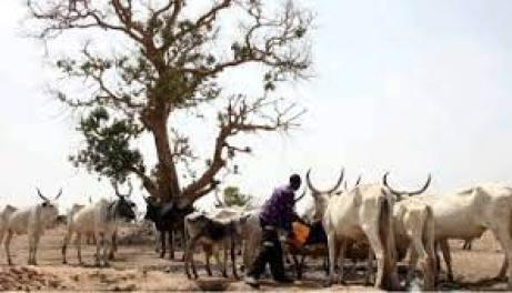 N2m assumed cost of cow: Gani Adams slams Miyetti Allah
