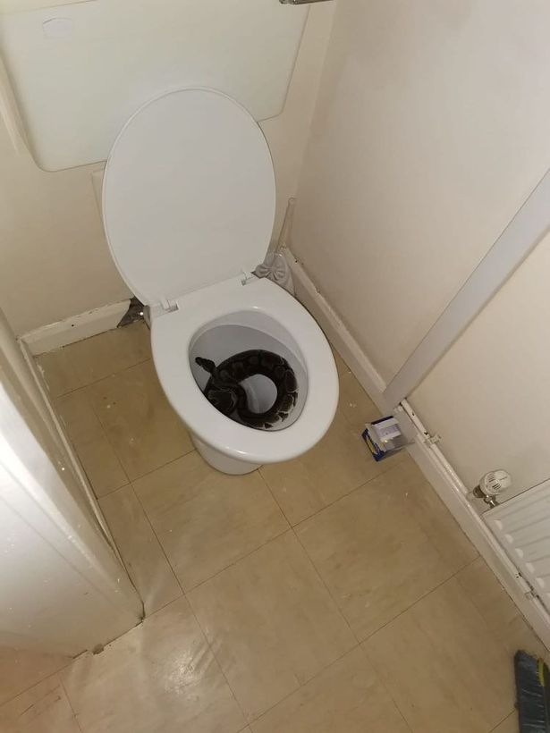 Brit woman finds terrifying 4ft escaped python lurking in her toilet bowl