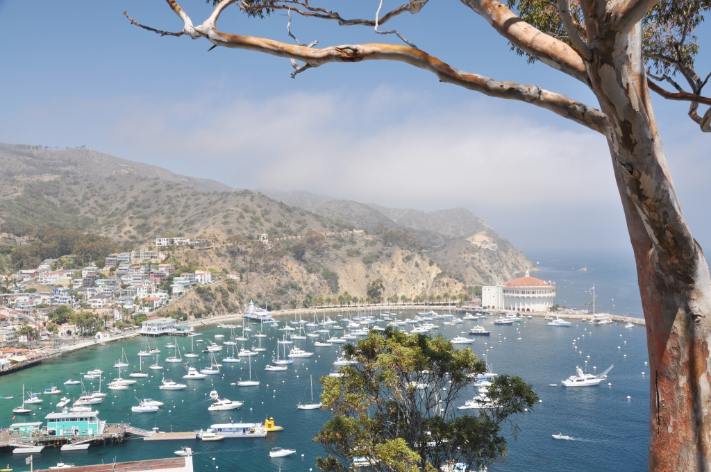 Lady by Choice - Catalina Island Sites Vintage View