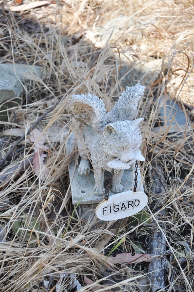 Lady by Choice - Catalina Island Pet Cemetery
