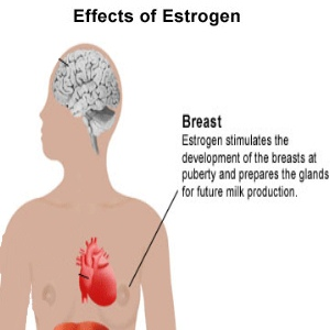 Four Essential Hormones For Breast Development