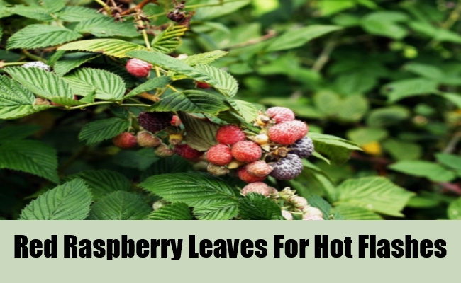 Red Raspberry Leaves For Hot Flashes