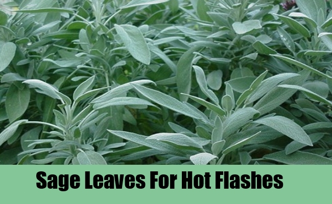 Sage Leaves For Hot Flashes
