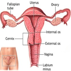 Symptoms And Diagnosis Of Uterine Dysfunctional Bleeding