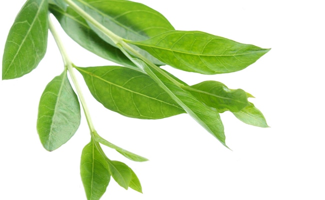 Heena Leaves, Mustard Oil And Coconut Oil