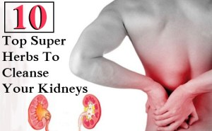 10 Top Super Herbs To Cleanse Your Kidneys