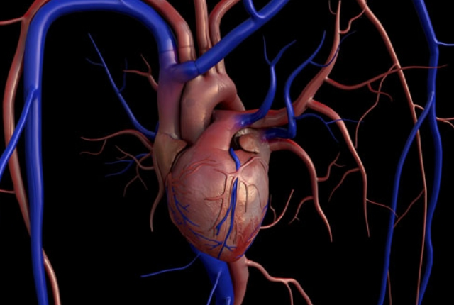 Deposition Of Calcium On Aortic Valve