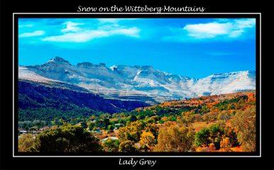 Lady Grey