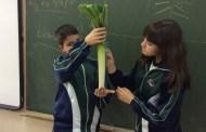 Aprendemos más sobre el tallo de las plantas