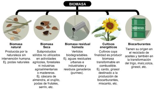 ¿Qué es la energía biomasa?
