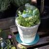 Cloche de verre BELLA