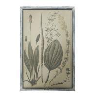 tableau d'une planche botanique vintage