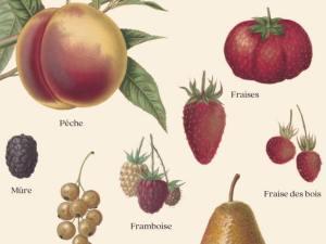 Les Fruits du Verger