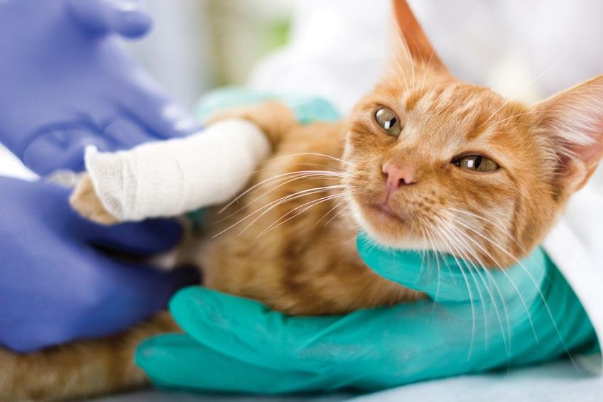 Comment choisir une assurance santé pour animaux ?
