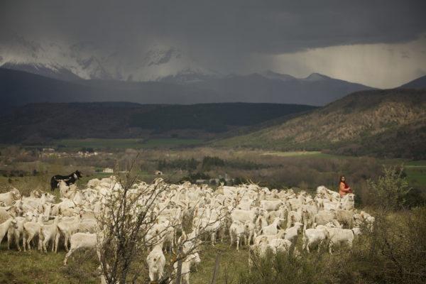Lila et le troupeau dans la plaine (@Parismatch)