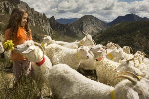 Chèvres dans la vallée de Sigottier (@Parismatch)