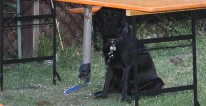 cane Achille