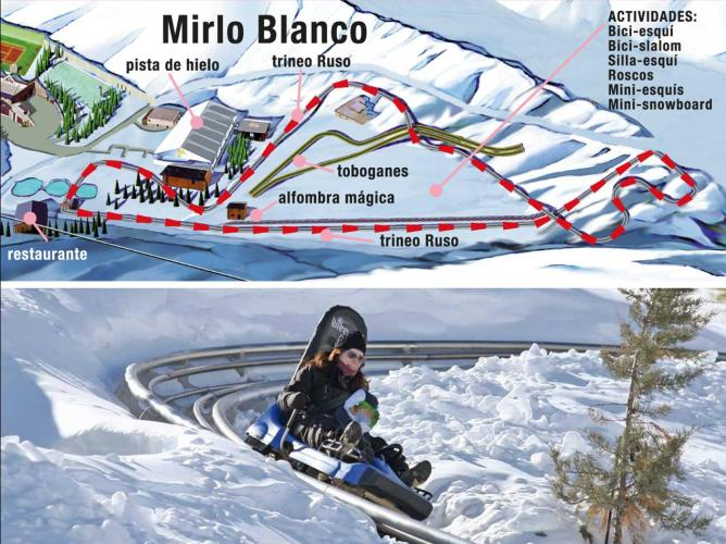 Mirlo-Blanco-Sierra-Nevada