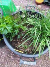 Comment associer les plantes ? dans la strate couvre sol