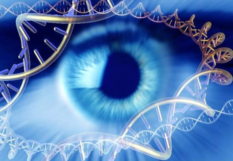 Visión y herencia genética - portada
