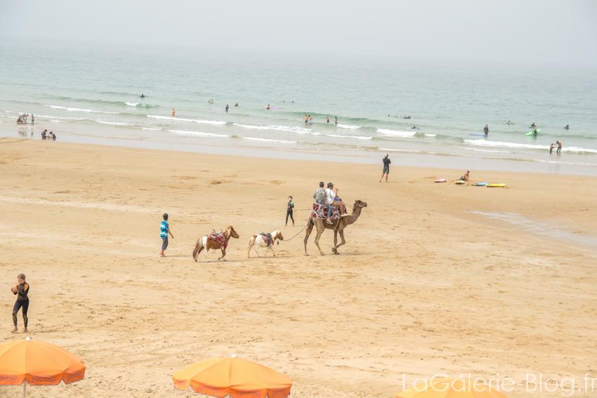 chameau sur la plage taghazout avec des poneys !