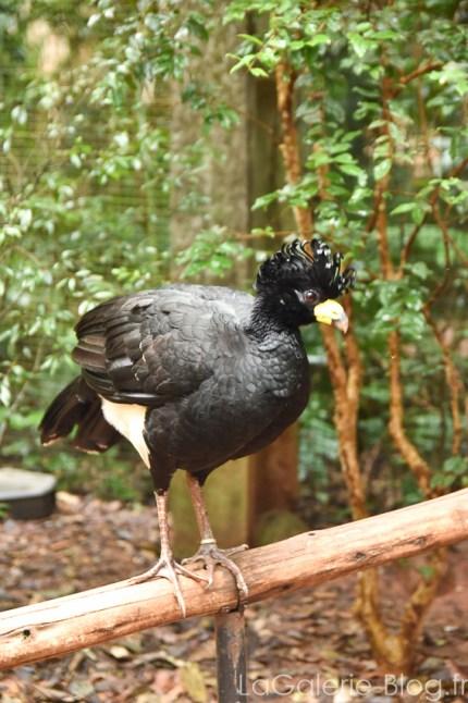 specimen d'oiseau dans le parc