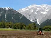 "Hybridmais aus dem Lagerhaus – ""das Beste, was es bei Mais gibt"", Foto: Knut Kuckel/Mieming-Online.at"
