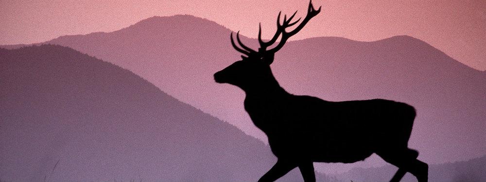 Il Dono del Cervo