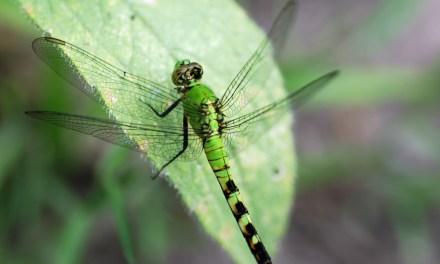 Trois-quarts des insectes volantes ont disparu, selon chercheurs