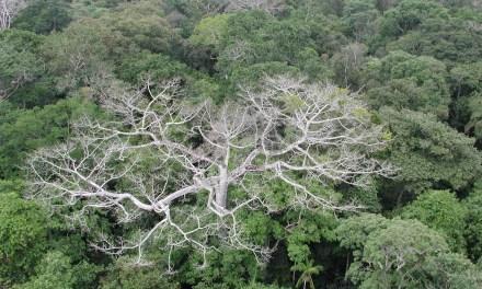 La sécheresse tue la forêt amazonienne—une nouvelle croissance n'émerge pas assez vite pour la remplacer
