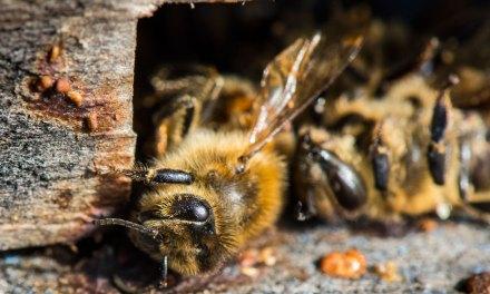 Les insecticides néonicotinoïdes seront interdits dans toute l'Europe
