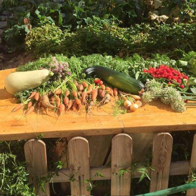 cosecha de la guarde del huerto