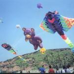 KiteFlyFestival