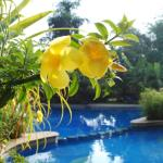 PoolsideYellowFlowers