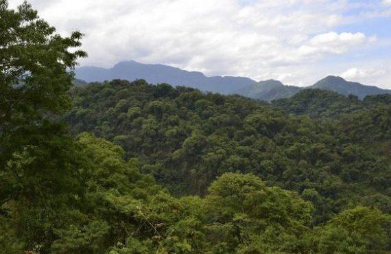 Presentaron en Salta la convocatoria del Plan Nacional de Restauración de Bosques Nativos