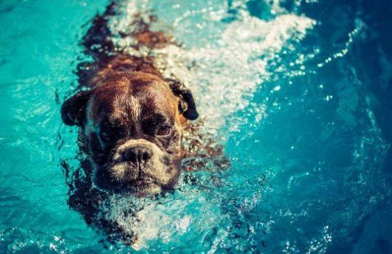 En verano los perros también disfrutan la pileta