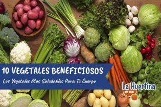 Las 10 Hortalizas Mas Saludables Para Nuestro Organismo