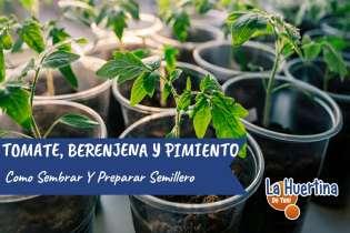 Como Sembrar Tomates Pimiento Y Berenjenas