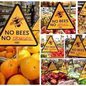 Alerta Mundial: Extinción de las abejas.