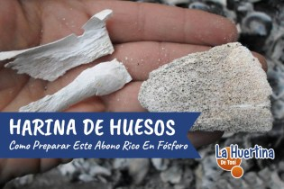 Cómo Hacer Harina De Hueso Para La Huerta