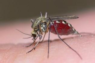 Trampas Caseras para insectos molestos
