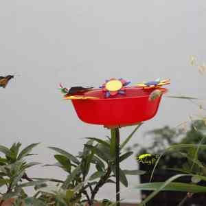 Ganadoras del Comedero de Mariposas