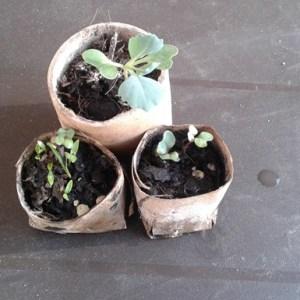 Semilleros Caseros Biodegradables