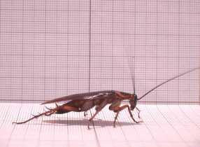 Combatir cucarachas en la Huerta