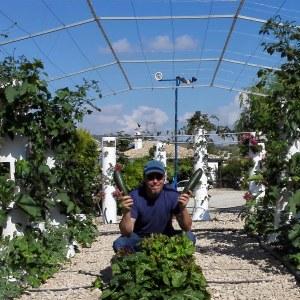 Organizar nuestro huerto rotaciones y asociaciones la for Asociacion cultivos huerto urbano