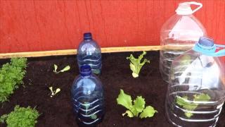 Como Hacer Mini Invernaderos Para Nuestras Plantas