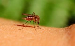 5 Plantas Fáciles De Cultivar Repelentes De Mosquitos