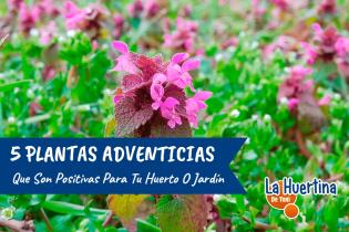 5 Plantas Adventicias Positivas de tu Huerta