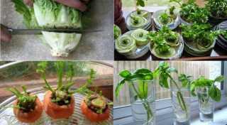 10 Vegetales Que Vuelven A Crecer Sin Semilla En Tu Cocina