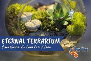 Cómo hacer un Eternal Terrarium para tener en Casa